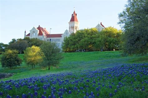 Blue Bonnets on campus at St. Edwards University Austin ... O Connor Texas