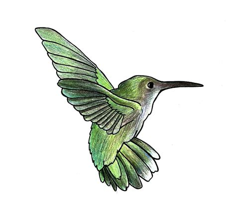 how to draw hummingbirds 7 steps with pictures wikihow