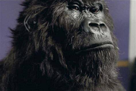 Wonderbra Recreates Cadbury Gorilla Advert For by Bbsdigmarket Digital Marketing Blogs