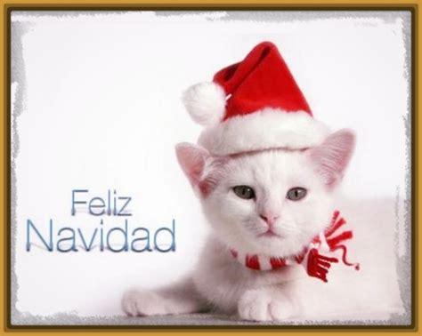 imagenes navidad gatitos perfectas imagenes de gatitos tiernos navidad imagenes