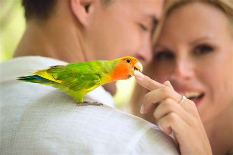 buying birds and parrots