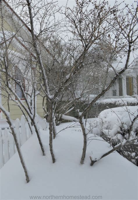 Preparing Garden For Winter by Preparing The Garden For Winter Northern Homestead