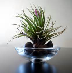 alternatives to flowers terrariums with air plants and succulents weddings 224 la mode