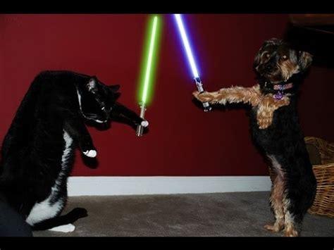 cat vs fight top 5 real cat vs fight animals