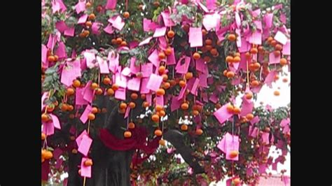 wishing tree for new year new year special wishing tree and wishing pond 1