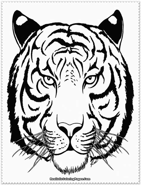 tiger color tiger animal coloring pages coloring home