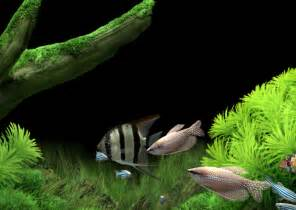 Free 3d aquarium screensaver free