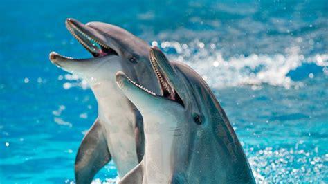 nova official website  smart  dolphins