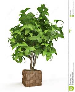 arbre d 233 coratif de plante d int 233 rieur photo stock image