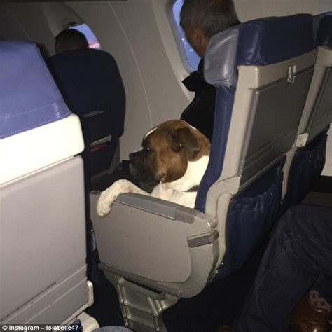 dogsonplanes shows canines chilling   feet