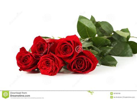 imagenes de rosas rojas frescas cinco rosas rojas frescas en un fondo blanco foto de
