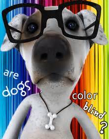 are dogs color blind are dogs colorblind image search results