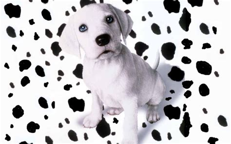 puppy spots puppies images oh no my spots fell hd wallpaper and background photos