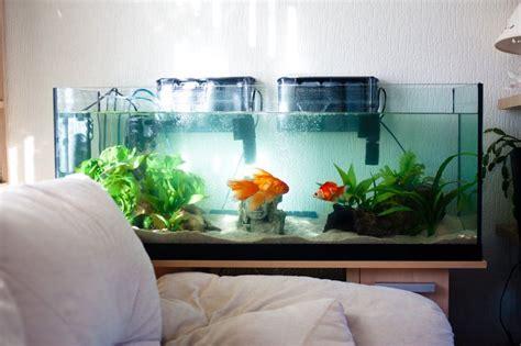 aquarium design austin tx 35 best aquariums images on pinterest fish tanks fish