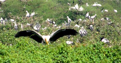 kumarakom bird sanctuary boating kerala tours archives