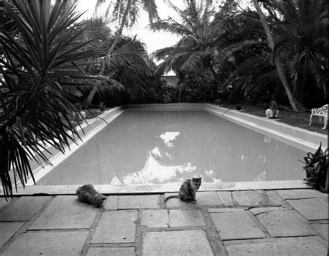 ernest hemingway house key west florida memory cats by swimming pool at the ernest hemingway house museum key west