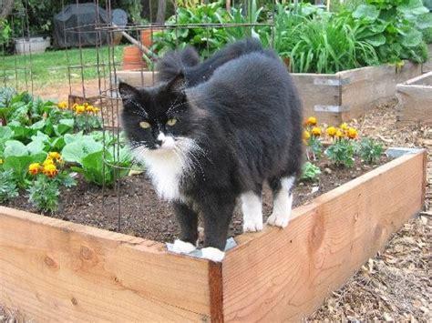 le chat au jardin les chats d audenge