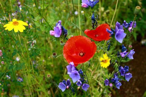 fiori prato prato fiori prati 183 foto gratis su pixabay