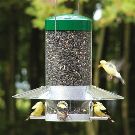 bird feeders shop birds choice steel squirrel resistant 1 2 gallon bird feeder at lowes