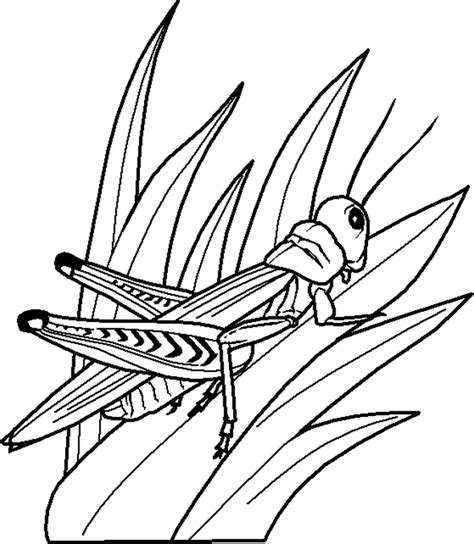 bug colouring pages