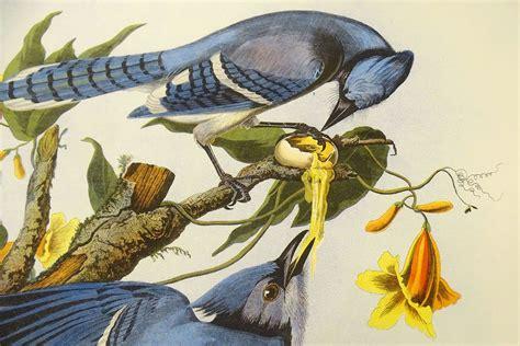 video audubon s birds of america lands at the bates