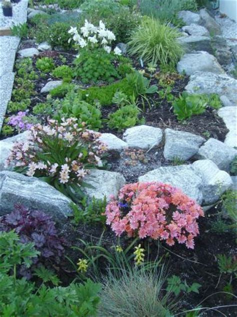 How To Start A Rock Garden Would Succulents Be Suitable On A Rocky Hill