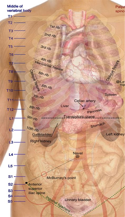 the body in the human body parts diagram human body parts chart human anatomy