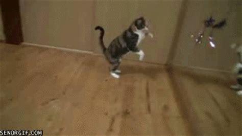 cat kitten jumping gif find  gifer