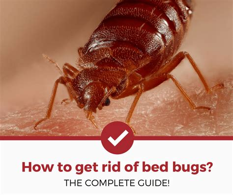is it possible to get rid of bed bugs how to get rid of bed bugs complete guide