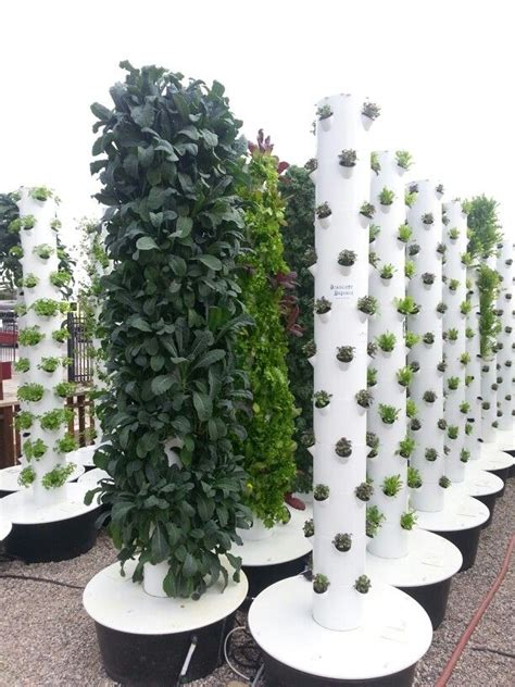 vertical garden with hydroponics in summerland my garden
