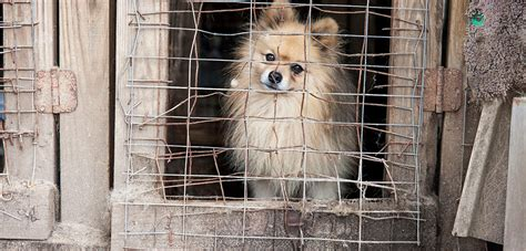 aspca puppy mills breaking aspca rescues more than 130 dogs from alabama puppy mill aspca