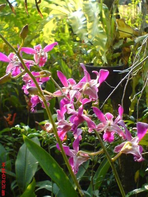 contoh gambar bunga hias contoh
