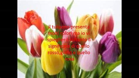significato dei fiori tulipani il significato dei tulipani