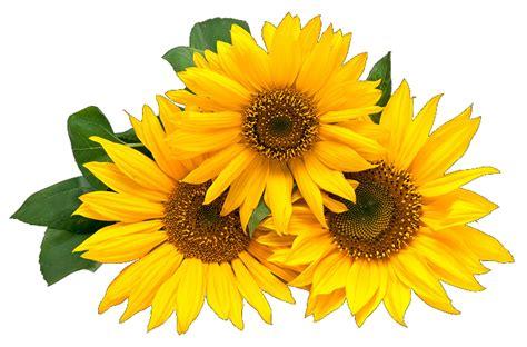 imagenes variadas de flores gifs im 193 genes de flores variadas