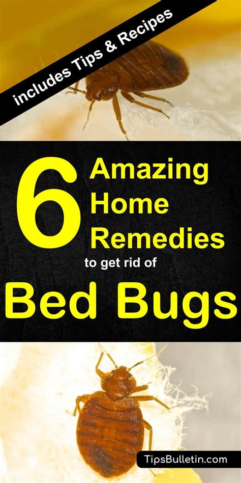 home remedies   rid  bed bugs  recipes