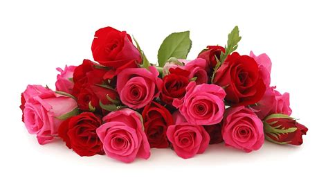 flower expert red and pink roses image free illustration flowers roses romance red rose