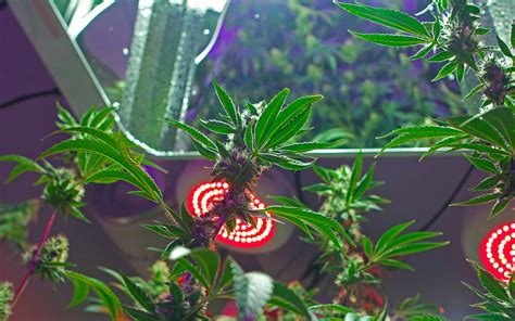 led vs hid grow lights everything you need to about grow lights led vs hid