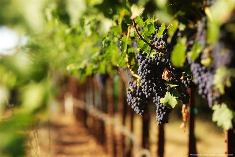 Napa Bed And Breakfast 3 Of The Best Places For A Mendocino Wine Tasting Sea