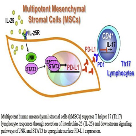 frontiers stromal cell induction of volume 7 34 sep 1 mesenchymal cell news