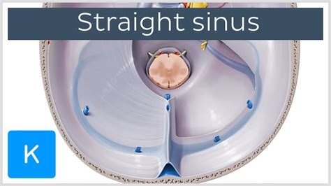 Video: Straight sinus Kenhub