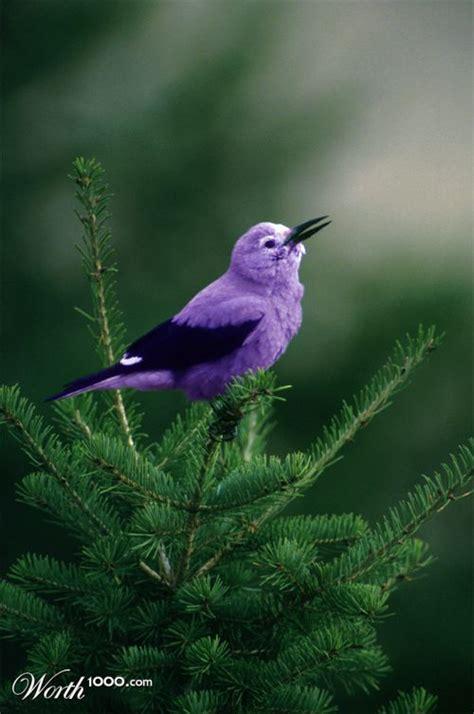 Bird Purple purple bird animals birds