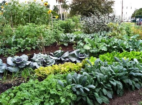 Winter Vegetable Gardens Baker Creek Heirloom Seeds Now At Edison Ford Winter
