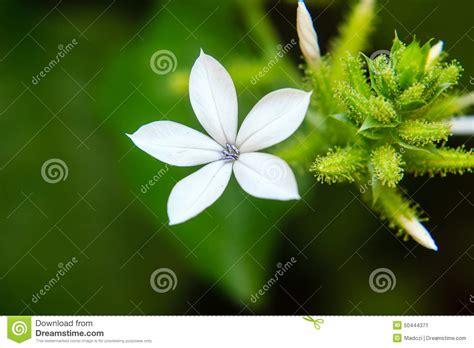 fiori bianchi piccoli piccoli fiori bianchi immagine stock immagine di verde