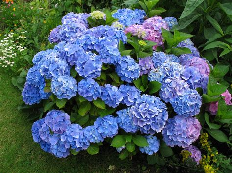top 10 most popular flowers flowers gardening top 10 most expensive flowers therichest