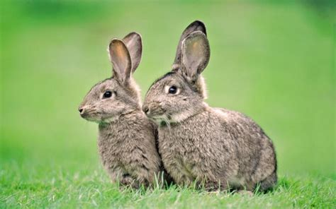 next new year rabbit 2 free windows 7 year of the rabbit themes