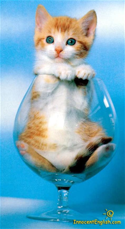 wallpaper of cat family cat family images cat in a glass wallpaper and background
