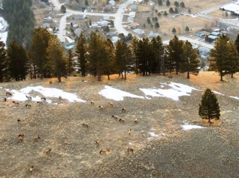 Top Zone Jumbo Hitam Jumbo elk closure on mount jumbo s south zone extended to april
