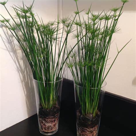 Pot Pour Plante Verte by Plantes En Pot D Int 233 Rieur Tentez L Originalit 233 Avec
