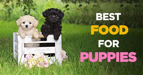 bench and field dog food reviews dog food brand top best dog food ratings and reviews