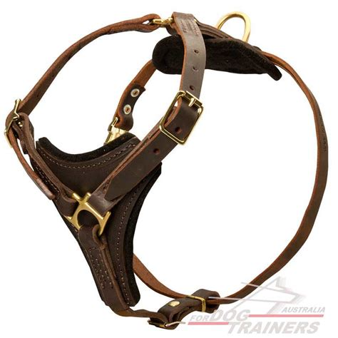 leather harness for dogs get tracking leather harness australian canine store